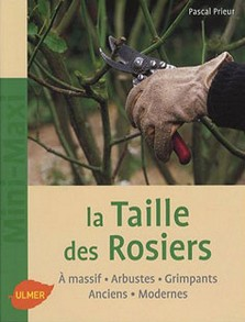 taille rosiers